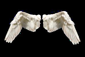 Propozycja – Aniołki ul. Śliwkowej